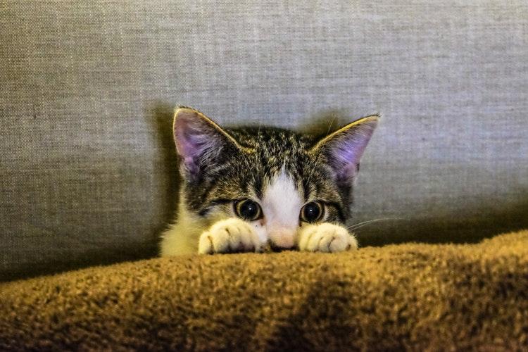 Festa del gatto 2021: il giorno dedicato agli amici a quattro zampe