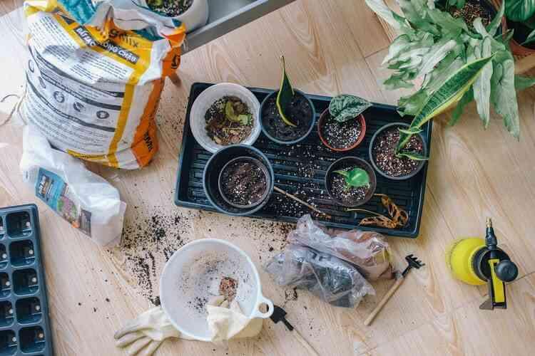 I migliori prodotti per il giardinaggio di Luglio 2020